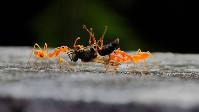Hikmah Kisah Nabi Sulaiman Dan Pasukan Semut