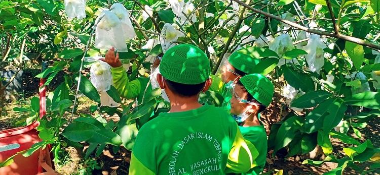 Rihlah Edukasi Kelas 3 SDIT Al Hasanah 1 ke Kebun Jambu